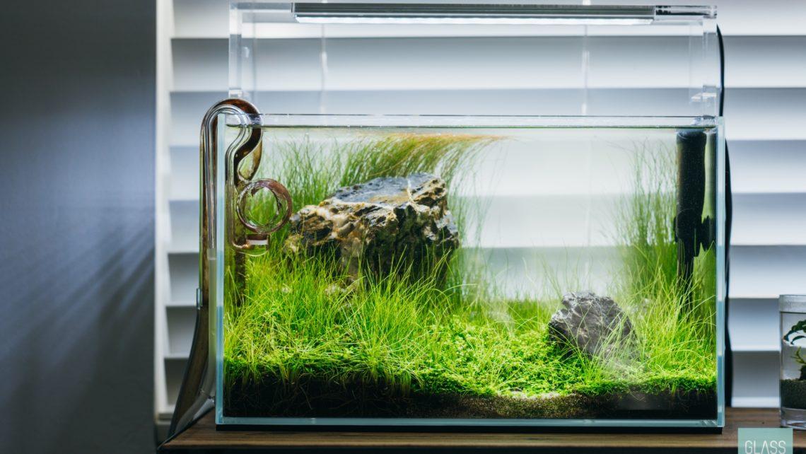 Planted Tank Aquascape