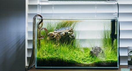 Planted Tank Aquascape
