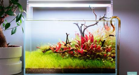 Planted Nano Aquarium Tank