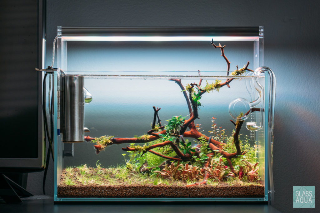 How to setup a planted tank planted tank aquarium glass aqua for How to clean an old fish tank