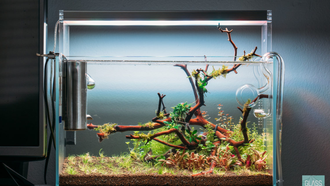 Planted Nano Betta Fish Tank