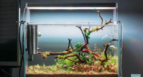 Planted Nano Betta Fish Tank
