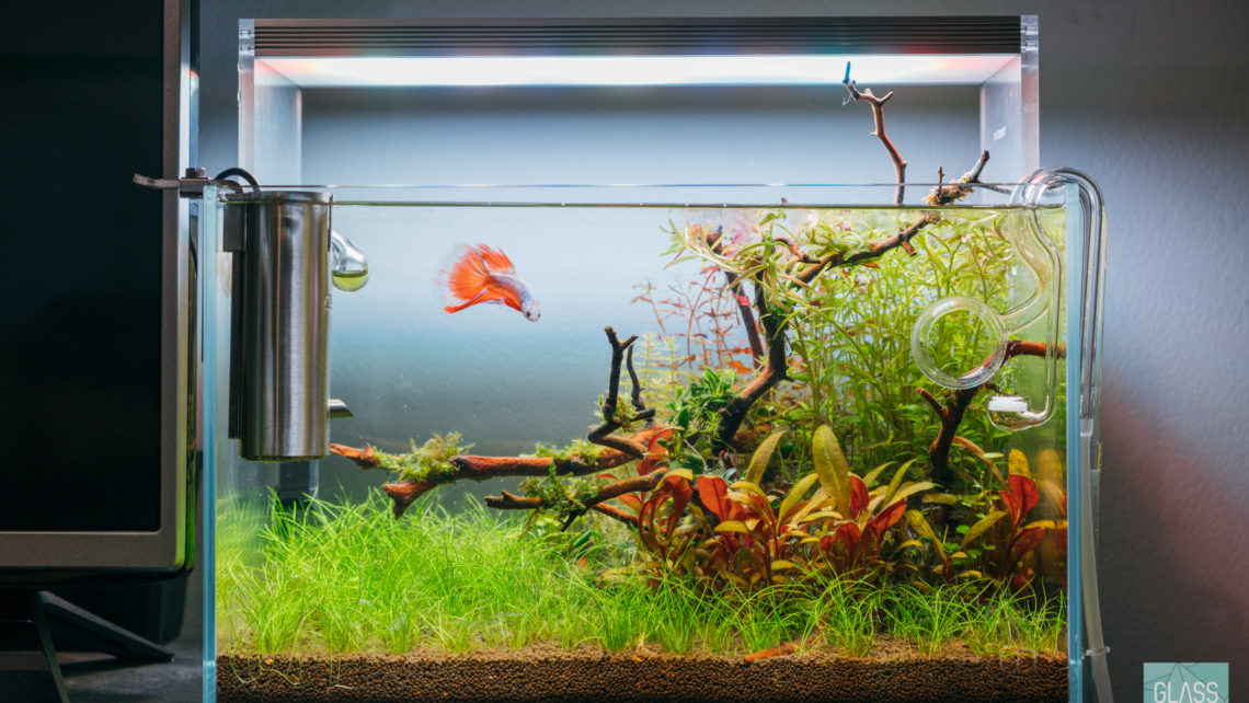 Planted Nano Tank