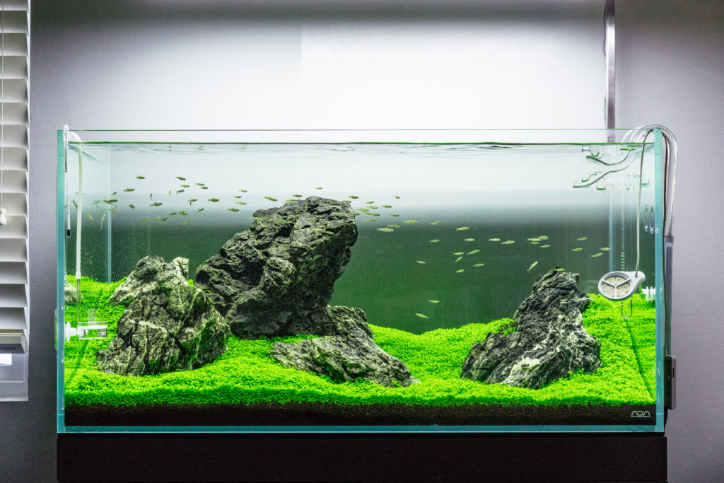 Guide To Planted Aquarium Aquascaping - Iwagumi - Glass Aqua