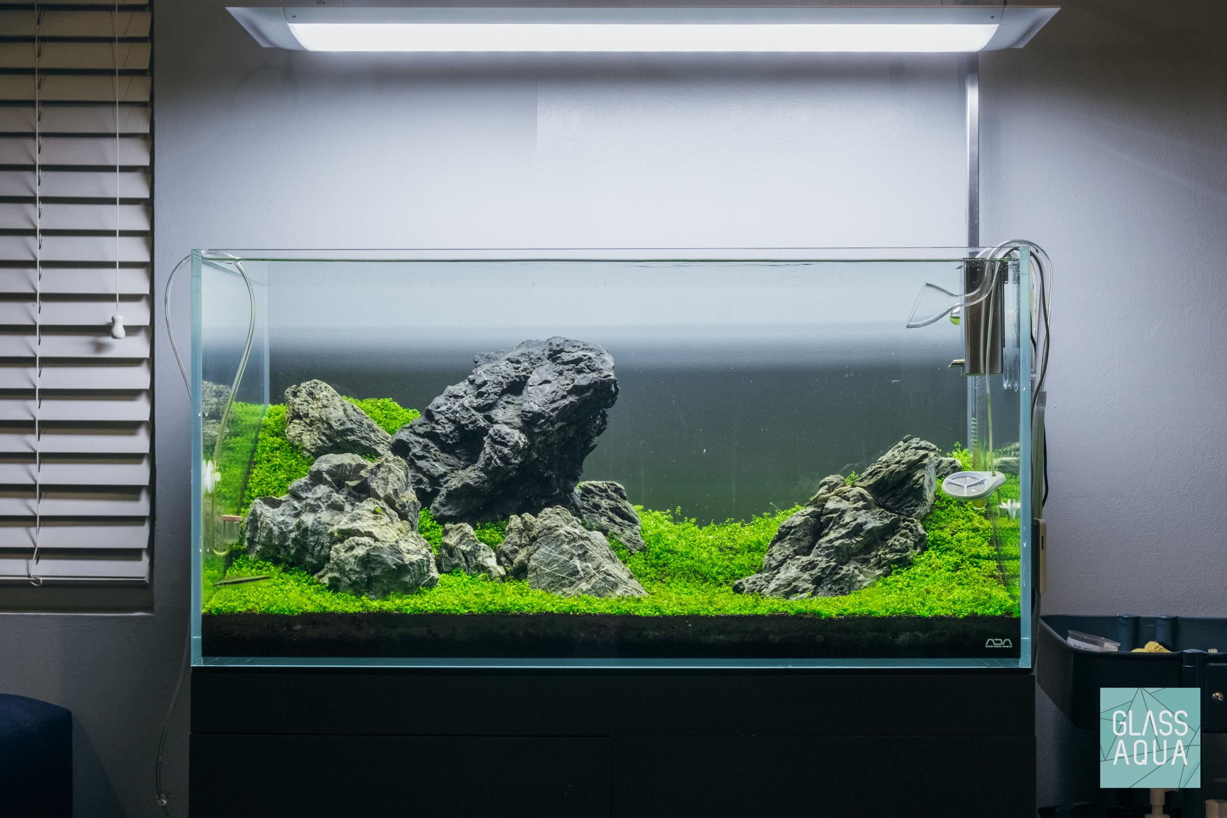 Guide To Planted Aquarium Aquascaping Rescaping And Replanting Glass Aqua