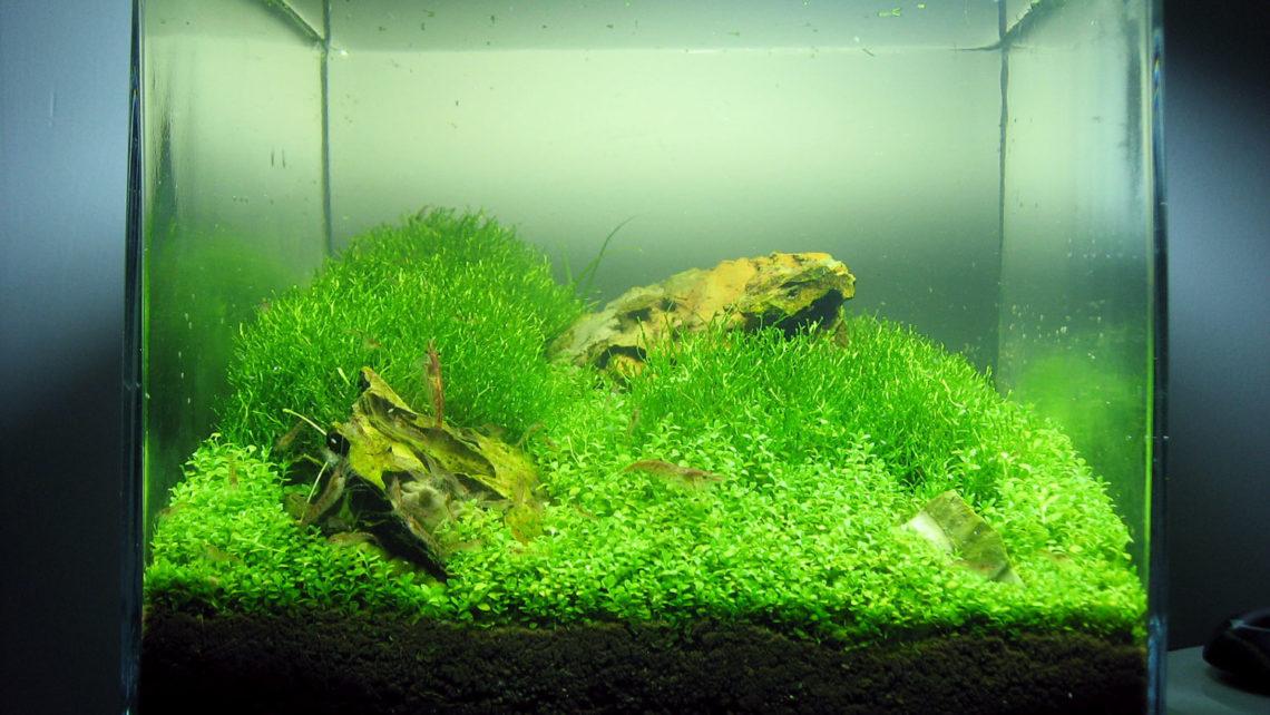 1 Gallon Planted Nano Shrimp Tank Gallery Glass Aqua