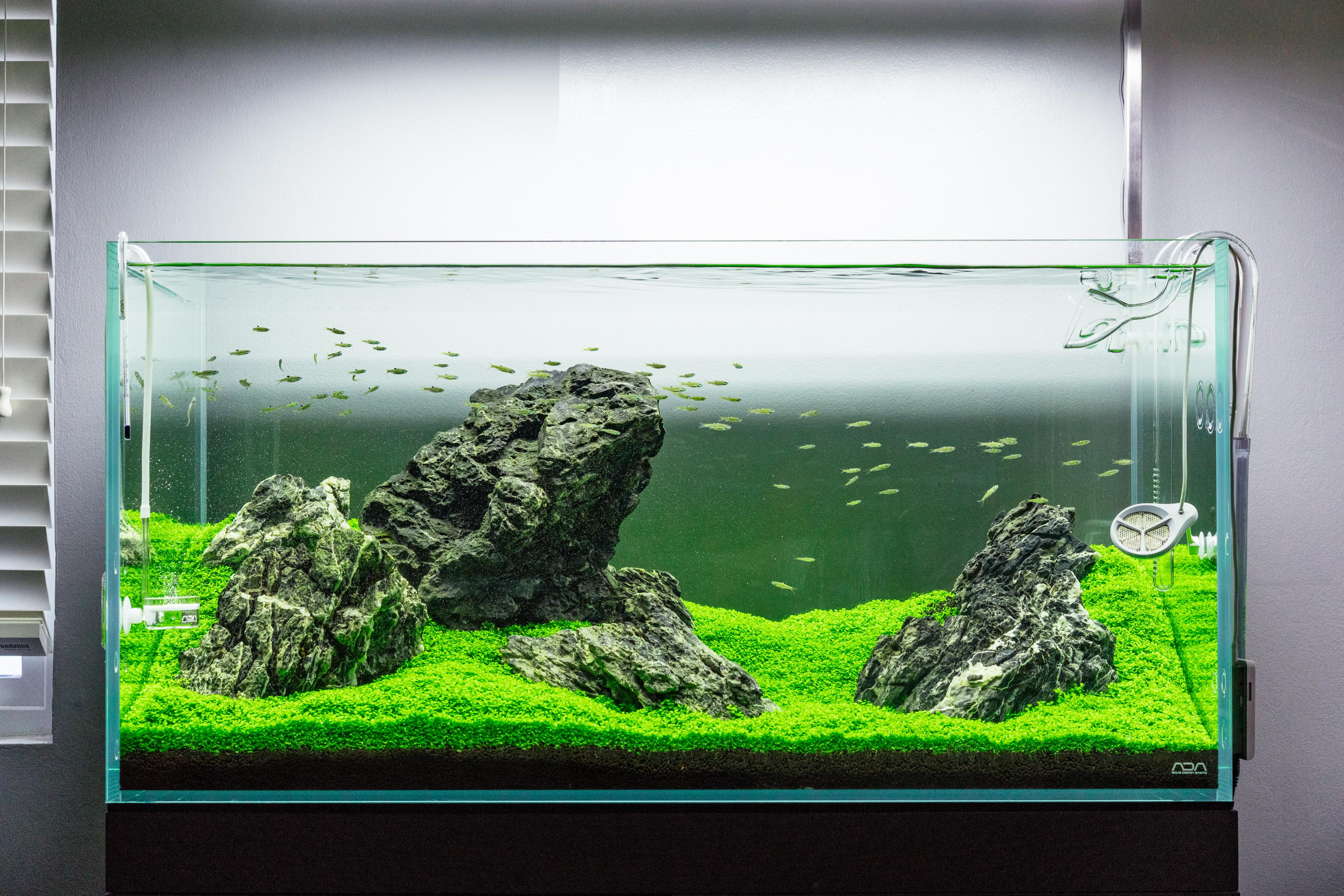 Simple Aquascape Aquarium